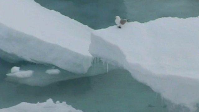 Melting white Arctic ice