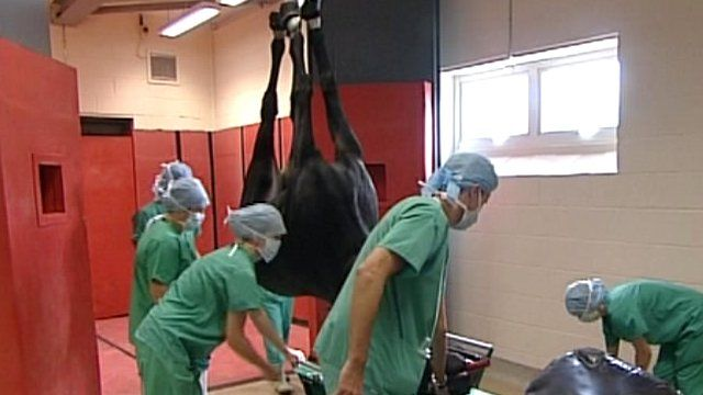 Preparing for a horse operation