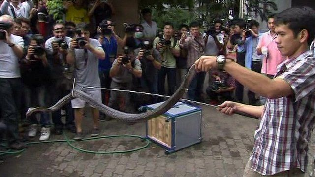 A man displays one of the seized snakes