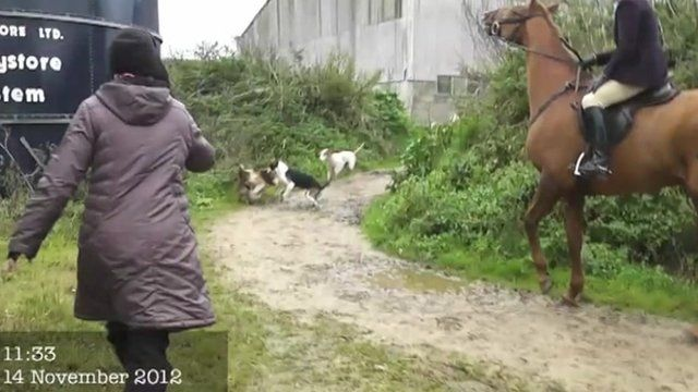 A still from the anti hunt campaigners' footage