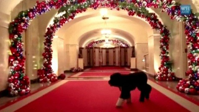 Bo in decorated White House corridor