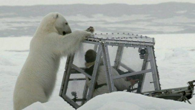 Polar Bear and Gordon Buchanan