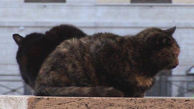 Cat sanctuary in Rome