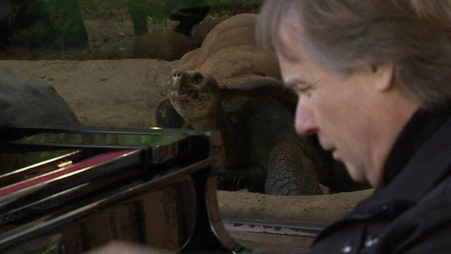 Richard Clayderman playing for Galapagos tortoises