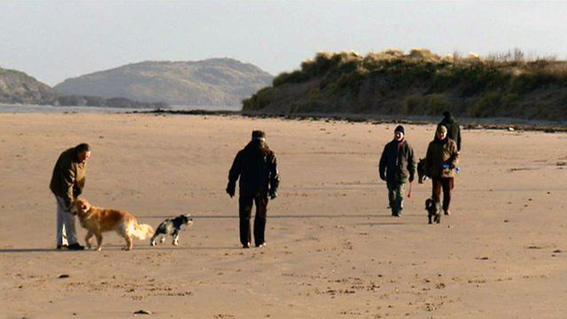 People walking dogs on the beach
