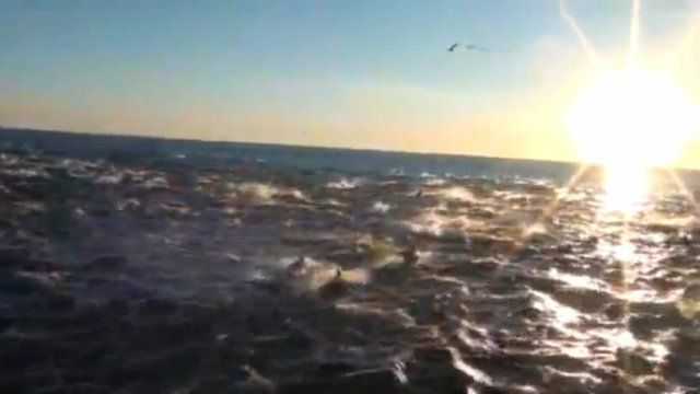 Dolphin pod captured on film