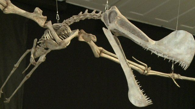 The replica of the pterosaur