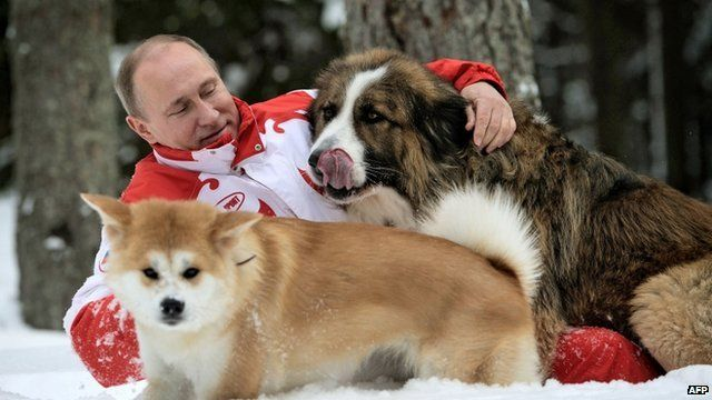 Vladimir Putin and two dogs