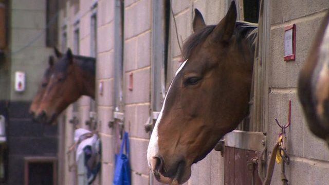 Horses at Heros, Wantage
