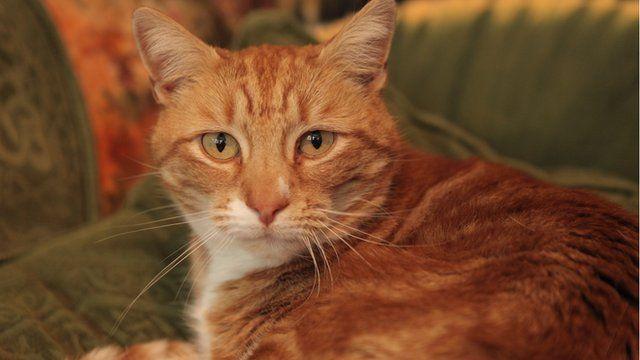 Bbc S The Secret Life Of The Cat
