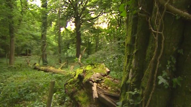 A study published in the Journal Functional Ecology found restricted growth of trees in the Wye Valley