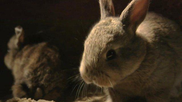 Rabbit in burrow