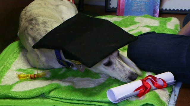 Dog with hat and scroll