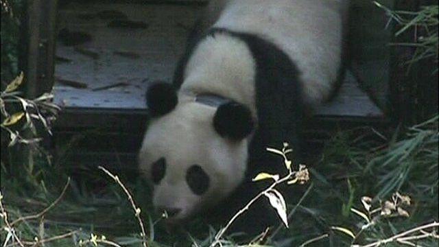 Zhang Xiang is released