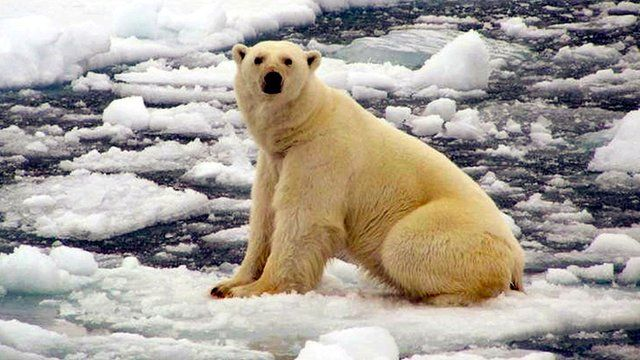 A polar in the Arctic Barents Sea region