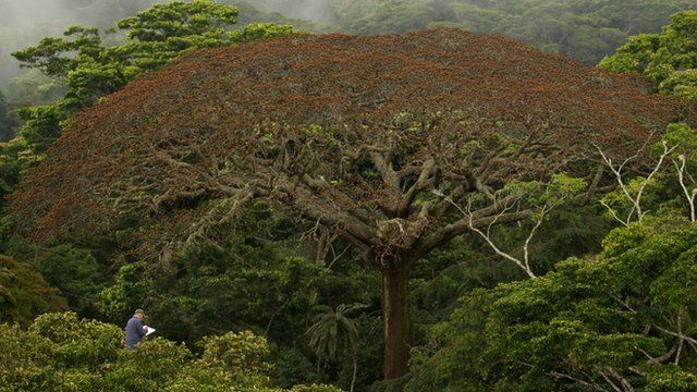 Botanist Francis Halle sits in the rainforest canopy (c) Wildbunch