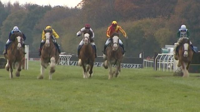 Clydesdale race