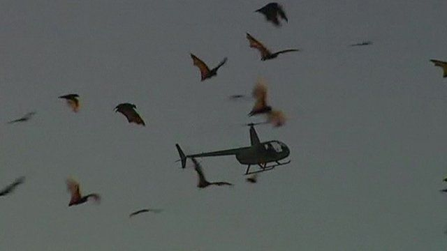 A helicopter in the sky, surrounded by bats