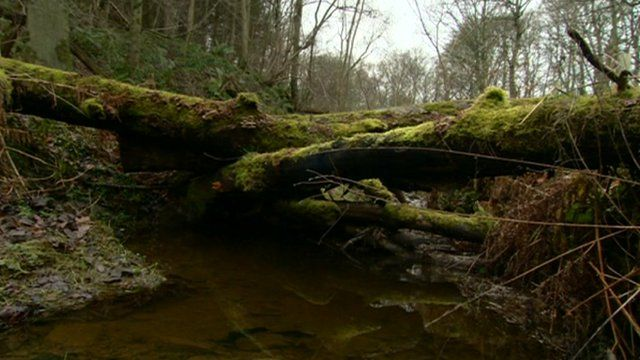 Logs in river