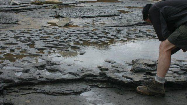 Earliest footprints