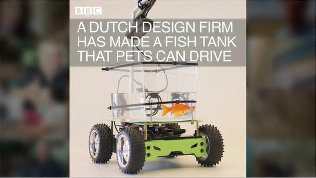 Fish driving its own tank