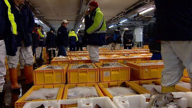 What fishermen think of the eu bbc news for Wholesale fish market near me
