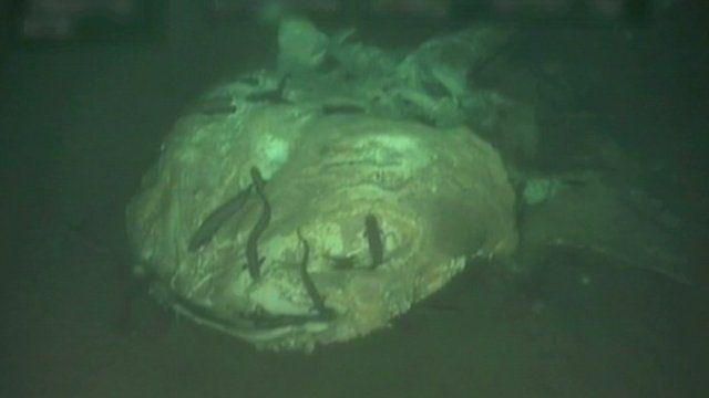 A whale shark carcass