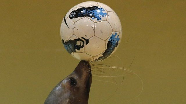 A seal balancing a ball on its nose