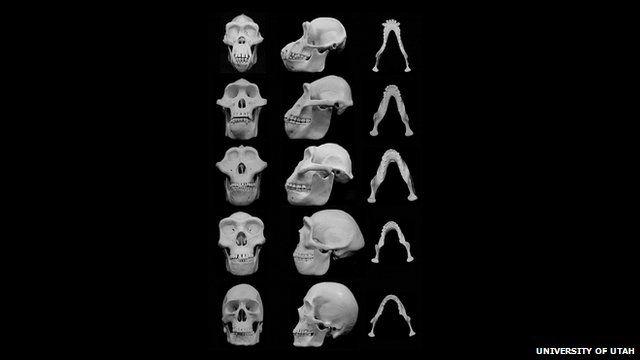 Facial bones evolving over time