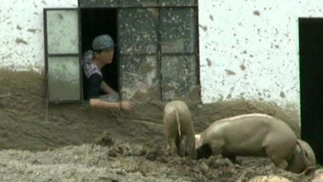 A Chinese farmer feeding pigs from through the window of his house due to mudslides in Yunnan province.