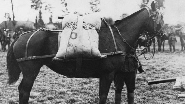 A pack horse used by British forces during World War I, Belgium, circa 1916.