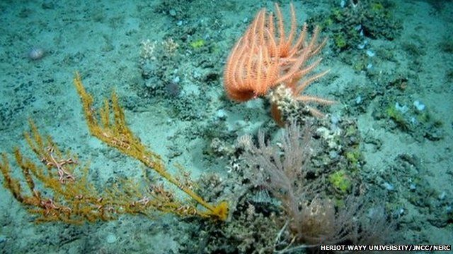 Hebrides Terrace Seamount
