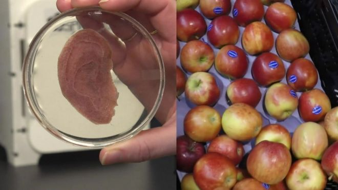 Cientistas usam maçã para criar tecido humano para transplante