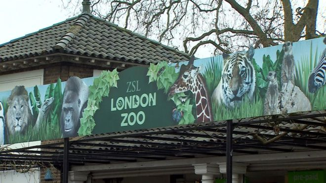 Image result for london zoo