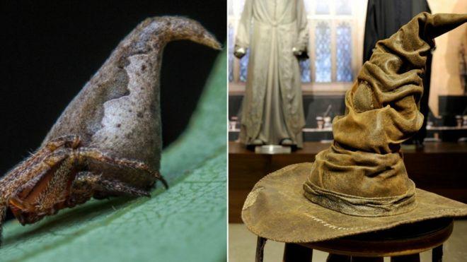 Eriovixia Gryffindori (D) al lado del Sombrero Seleccionador (I)