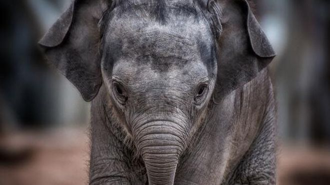 Bull elephant Hari Hi Way died on Tuesday after falling ill with a viral infection