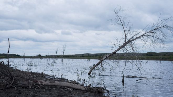 Trees submerged in the flooded forest