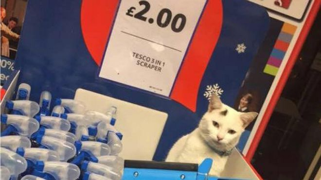 Supermarket Shoppers Mourn Cat
