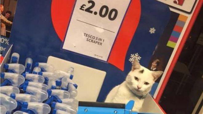 Supermarket Shoppers Mourn Cat