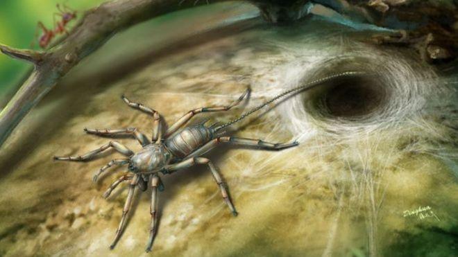 (ภาพจากฝีมือศิลปิน) Chimerarachne yingi มีหางและมีบรรพบุรุษร่วมกันกับแมงมุม คาดว่ามีชีวิตอยู่เมื่อราวหนึ่งร้อยล้านปีก่อน