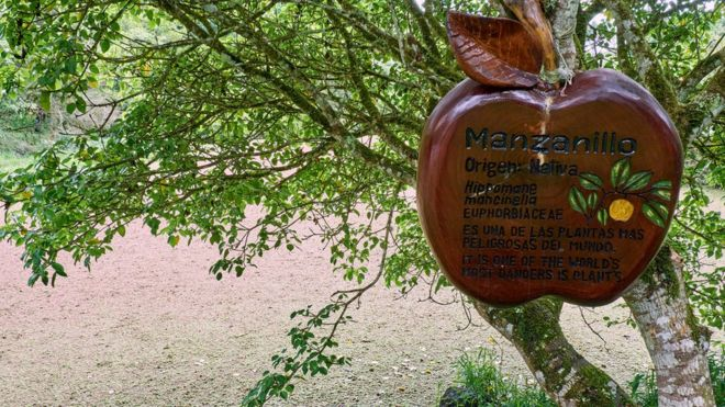 Árbol con alerta por peligroso