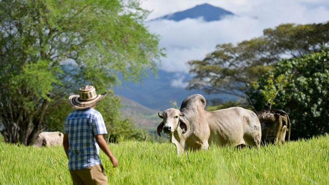 Ganadero en su campo rodeado de montañas en el Departamento del Cauca en Colombia