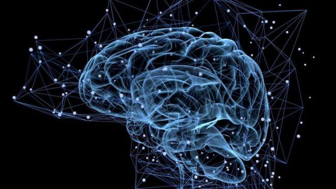 Những bộ não tạo từ da người