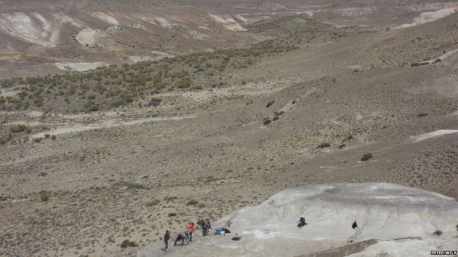 The fossils were unearthed in Patagonia, Argentina (source: bbc.com)