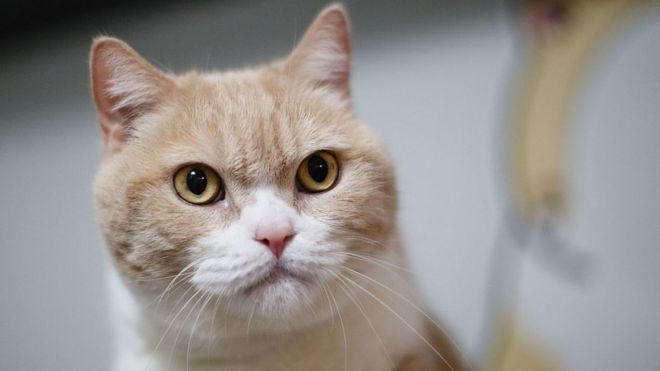 Pets at Home is recalling AVA dry cat food after three cats became ill.