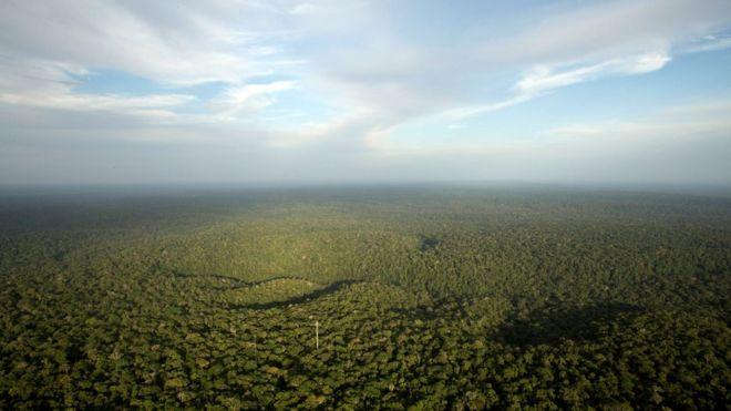 Vista da floresta amazônica