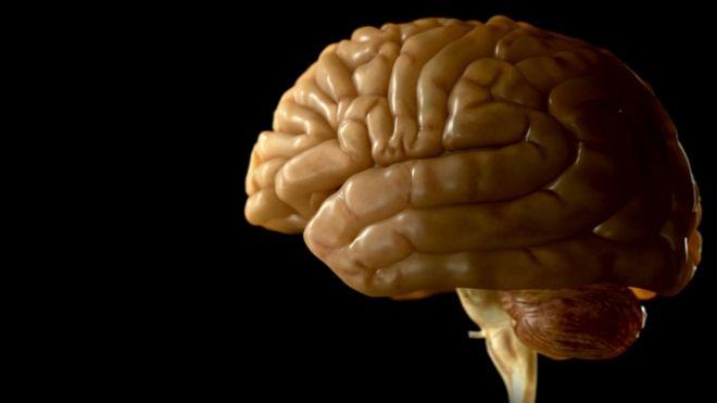 whole human brain