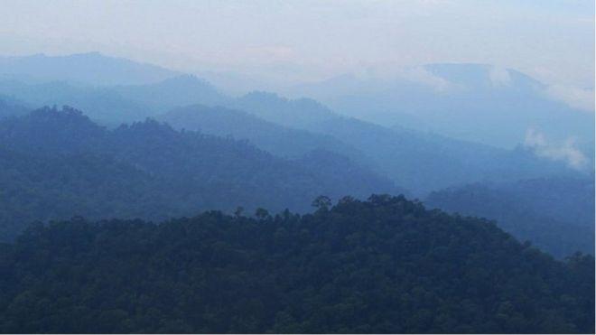 الغابات المطيرة في بورنيو
