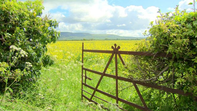 An open gate leading in to a field of an oilseed rape crop