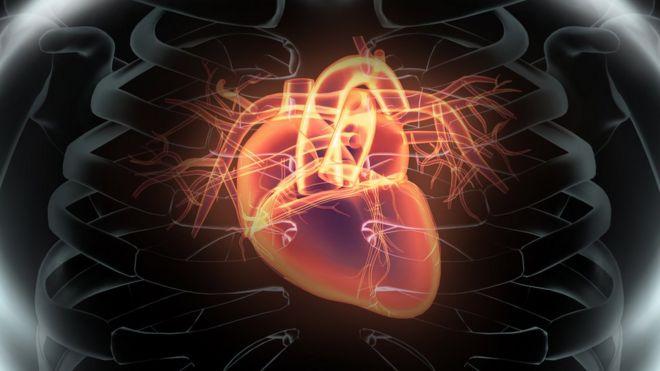 Ilustración digital de un corazón dentro del pecho